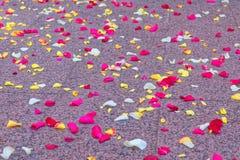 Pétalos de Rose dispersados en el piso imagen de archivo libre de regalías