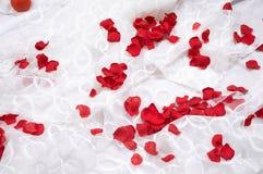 Pétalos de Rose en blanco Imagen de archivo libre de regalías