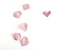 Pétalos de Rose en el fondo blanco fotos de archivo libres de regalías