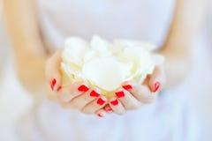 Pétalos de Rose en manos Fotografía de archivo libre de regalías