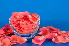 Pétalos de Rose en un bol de vidrio Imagen de archivo