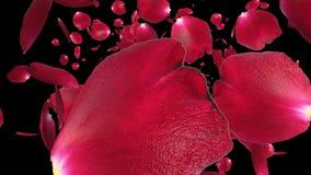 Pétalos de Rose que vuelan contra el negro, cantidad común stock de ilustración