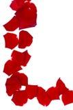 Pétalos de Rose rojos Foto de archivo