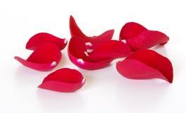 Pétalos de Rose rojos Imagen de archivo libre de regalías