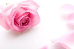 Pétalos de Rose rosados imagenes de archivo