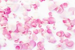 Pétalos de Rose rosados 01 Imagen de archivo libre de regalías