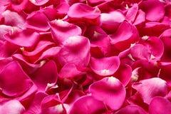 Pétalos de Rose, visión superior Imagen de archivo