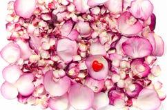 Pétalos de Rose y backgrund rojo del corazón Fotografía de archivo