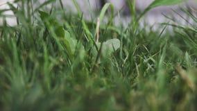 Pétalos de un césped verde debajo de un viento suave apacible almacen de metraje de vídeo