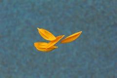 Pétalos del girasol Foto de archivo libre de regalías