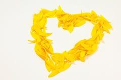 Pétalos del girasol del ââof del corazón Imagen de archivo libre de regalías