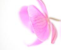 Pétalos en colores pastel Fotos de archivo libres de regalías