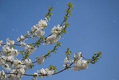 Pétalos que caen en primavera Imagenes de archivo