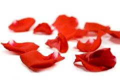 Pétalos rojos Fotografía de archivo libre de regalías