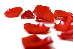 Pétalos rojos Imágenes de archivo libres de regalías