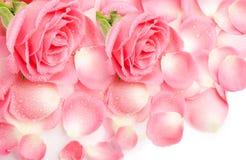 Pétalos rosados Fotografía de archivo
