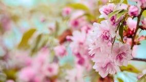 Pétalos rosados Fotos de archivo libres de regalías