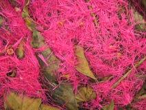Pétalos rosados Imagenes de archivo