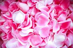Pétalos rosados Imágenes de archivo libres de regalías