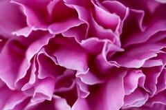 Pétalos rosados de la flor Fotografía de archivo libre de regalías