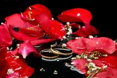Pétalos y anillos Imagenes de archivo