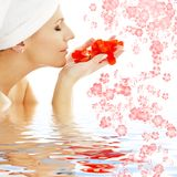 Pétalos y flores rojos en wate Foto de archivo
