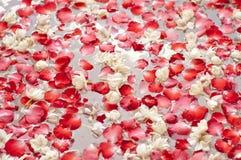 Pétalos y jazmín de Rose en el Jacuzzi Foto de archivo