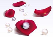 Pétalos y perlas de Rose Fotos de archivo libres de regalías