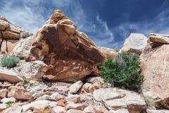 Pétroglyphes sur la roche en parc national de voûtes Image libre de droits