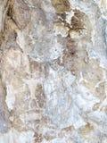 Pétroglyphes sur le lac Baïkal Photos libres de droits