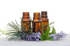 Pétrole d'arome dans des bouteilles avec la lavande, le pin et la menthe Photographie stock libre de droits