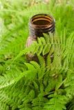 Pétrole et lame aromatiques de fougère Image libre de droits
