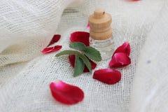 Pétrole et pétales de Rose Photo stock