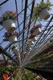 pétunia Mettez en place avec des fleurs de ressort et d'été dans des pots accrochants en serre chaude Pétunias colorés dans des p Images stock