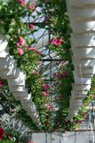 pétunia Mettez en place avec des fleurs de ressort et d'été dans des pots accrochants en serre chaude Pétunias colorés dans des p photos stock