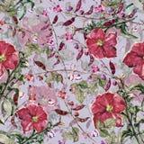 Pétunia rouge avec des fleurs de haricot d'aquarelle Modèle sans couture floral sur Gray Background Photo stock