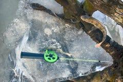 Pêche active de repos pour la perche en hiver de glace Photo libre de droits