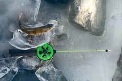 Pêche active de repos pour la perche en hiver de glace Images libres de droits