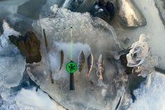 Pêche active de repos pour la perche en hiver de glace Photos stock