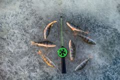 Pêche active de repos pour la perche en hiver de glace Image libre de droits