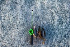 Pêche active de repos pour la perche en hiver de glace Photos libres de droits