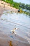 pêche Amorce pour le poisson-chat - grenouille sur le crochet sur la rivière Image libre de droits