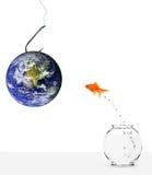 Pêche avec la terre comme amorce Photos libres de droits