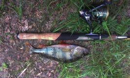 Pêche basse et tournante Photos stock