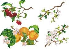 Pêche, cerise et fleurs illustration de vecteur