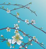 Pêche Cherry Blossom Flowers Background Pattern Image libre de droits