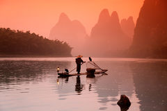 Pêche chinoise d'homme avec des oiseaux de cormorans Image stock