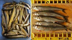 Pêche crue de glace d'éperlan de poissons Photo libre de droits