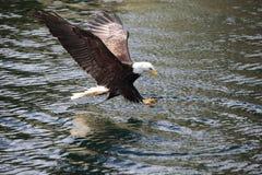 Pêche d'aigle Photos libres de droits