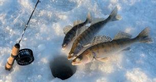 Pêche d'hiver sur le zander Photo stock